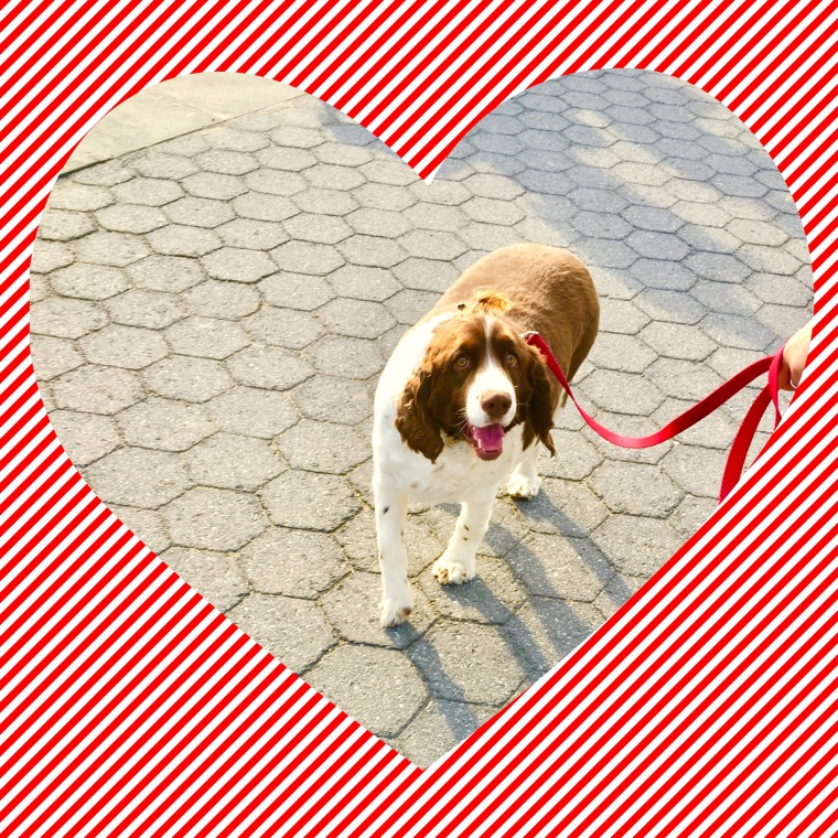 New York City dog
