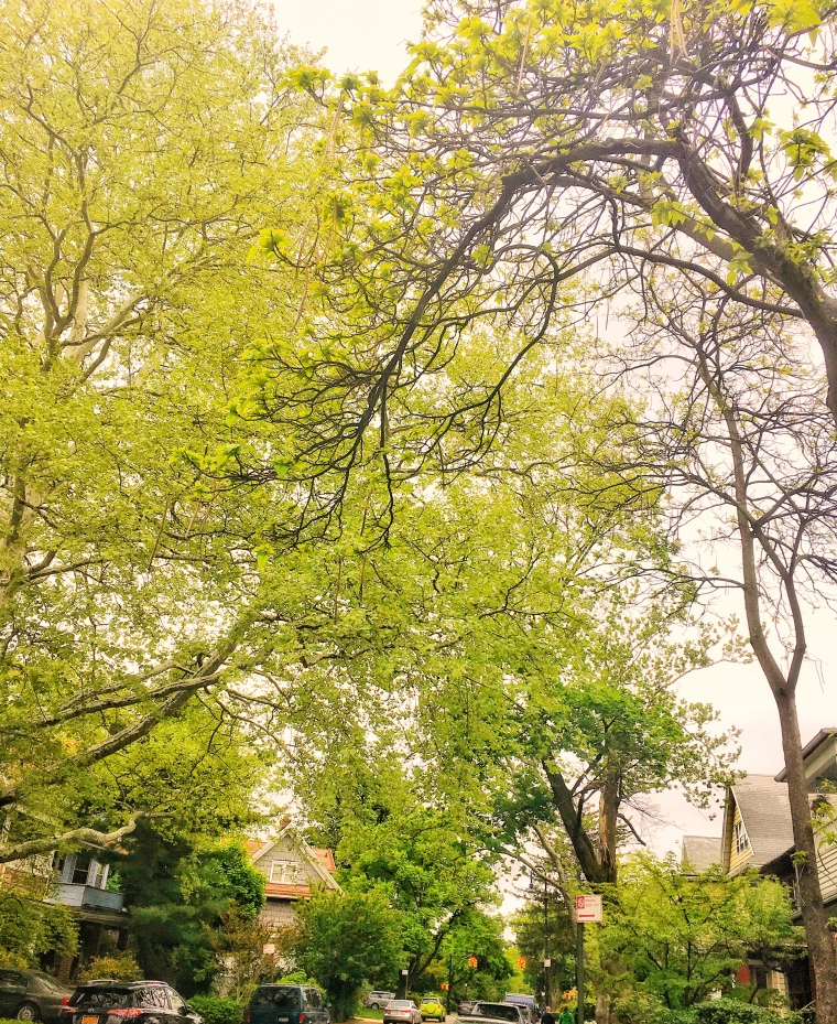 Trees of Ditmas Park