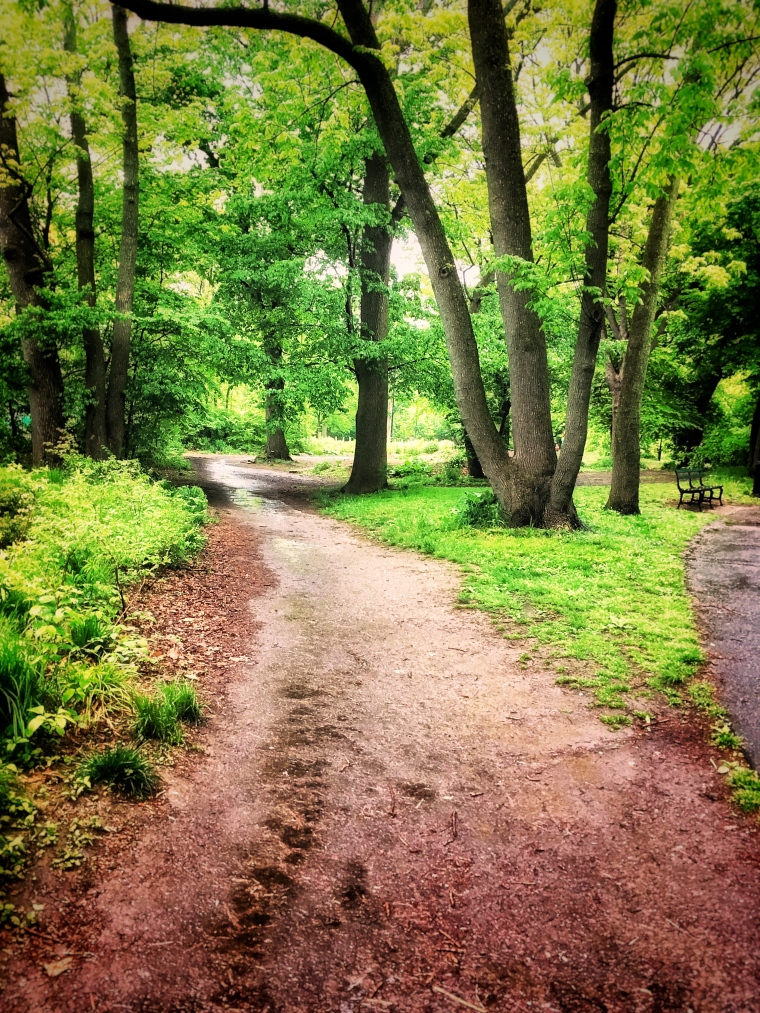 Prospect Park bridle path
