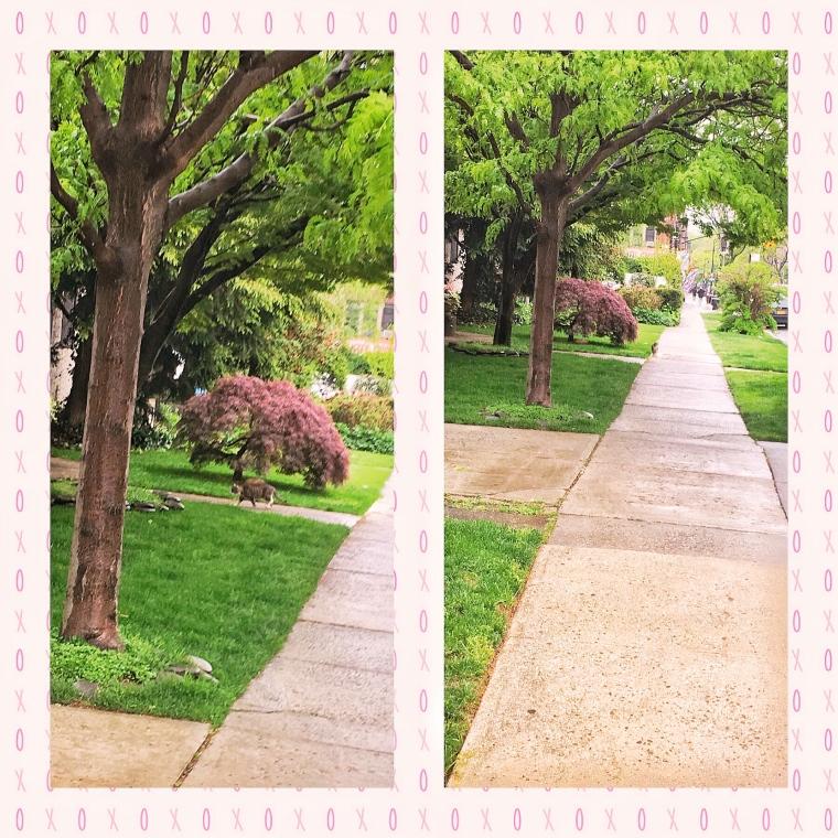 Ditmas Park, Arglye Road