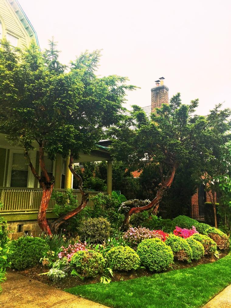 Ditmas Park Victorian Homes