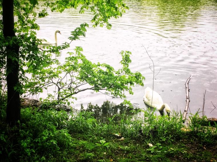 Prospect Park Lake