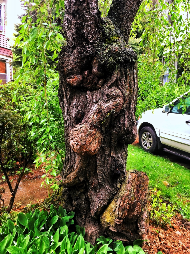 Ditmas Park tree trunk