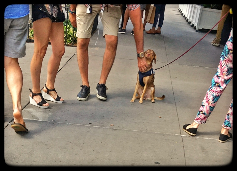 East Village Dog